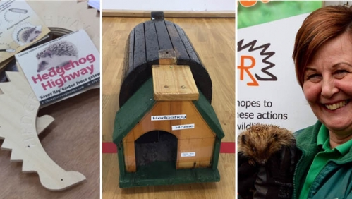 Encouraging the community to look after their wildlife, including hedgehogs